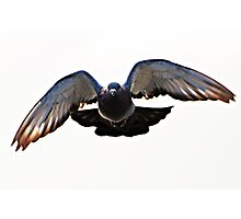 Pigeon Power Photographic Print