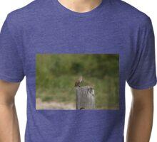 Singing Sparrow Tri-blend T-Shirt