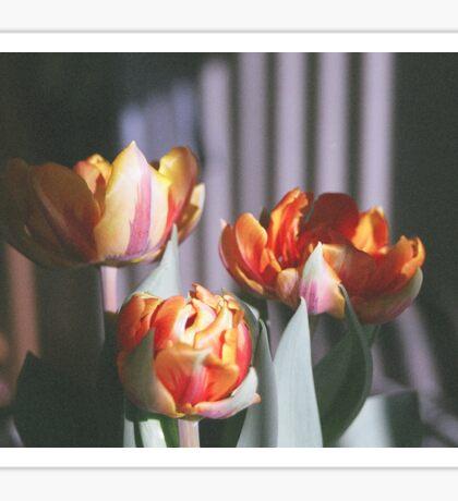 'Tulips' Sticker