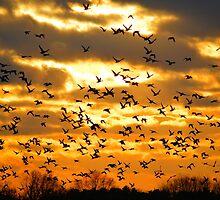 Ducks Unlimited by Duane Sr