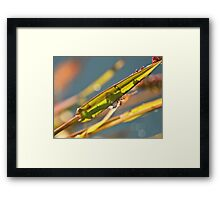 NS Small Worlds VI© Framed Print