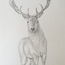 Red Deer by opheliasfiction