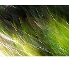 Watching the Wind Blow #2 Photographic Print