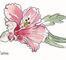 Hibiscus beauty by Maree Clarkson