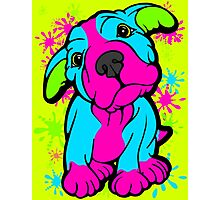 Colourful Pit Bull Puppy  Photographic Print