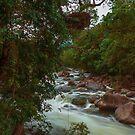 Mossman Gorge Daintree Rainforest North QLD Australia by Toni McPherson