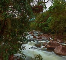 Mossman Gorge Daintree Rainforest North QLD Australia by Toni McPherson