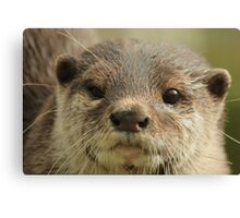 Short Clawed Asian Otter Canvas Print