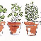 Herbs in pots by Maree Clarkson