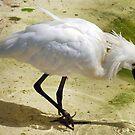 Bird in low water by Arie Koene