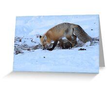 Scavenger Fox Greeting Card