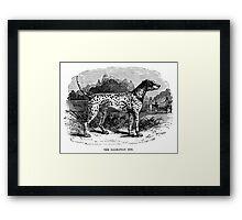 Vintage Dalmatian Dog Illustration Retro 1800s Black and White Image Framed Print