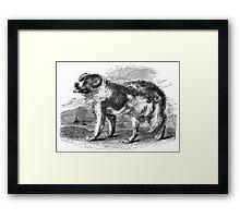 Vintage Newfoundland Dog Illustration Retro 1800s Black and White Image Framed Print