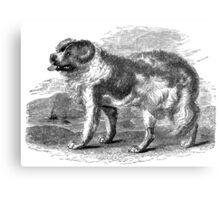 Vintage Newfoundland Dog Illustration Retro 1800s Black and White Image Metal Print