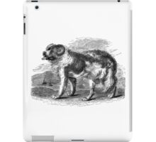 Vintage Newfoundland Dog Illustration Retro 1800s Black and White Image iPad Case/Skin