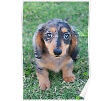 Adorable Puppy Poster