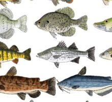 Freshwater Fish Group Sticker