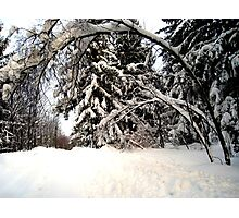 """Winter Wonderland"" Photographic Print"