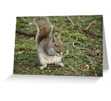 Squirrel Eating Nut Greeting Card