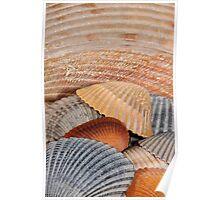 Colorful Seashells Poster
