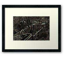 Lynx Point Siamese Cat Framed Print