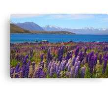 Lake Tekapo and wild flowering lupins Canvas Print