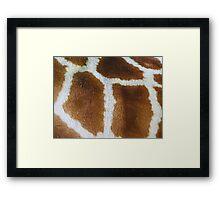 Giraffe fur   Framed Print