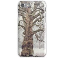 Platan Tree in Early Winter iPhone Case/Skin