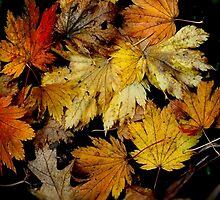 Golden - Autumn in Mt Wilson NSW Australia by Bev Woodman