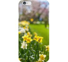 Spring Daffodils in Keukenhof Garden iPhone Case/Skin