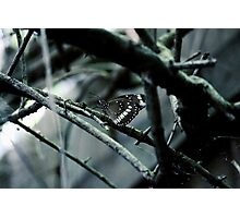 Crow Butterfly Photographic Print