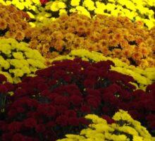 Colorful Flowers, Jersey City, New Jersey Sticker