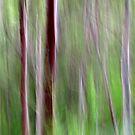 Woodlands by Kitsmumma