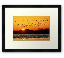 Snow Geese Flying at Sunrise Framed Print