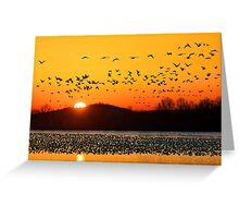 Snow Geese Flying at Sunrise Greeting Card