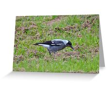 Australian Magpie Greeting Card