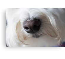 Sweet Little Sniffer Canvas Print