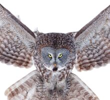 Power - Great Grey Owl Sticker