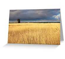Grassy field in the Australian countryside. Greeting Card