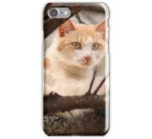 "GINGER AND HIS ""SUNSHINE"" SPOT iPhone Case/Skin"