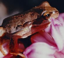 JUST PHOTOS ~ CRITTERS ~ Brown Tree Frog on Hyacinth by tasmanianartist Sticker