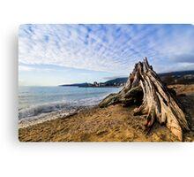Tree Stump on beach Canvas Print