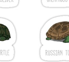 Know Your Turtles Sticker