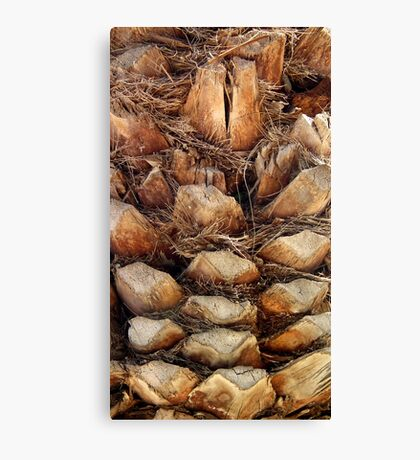 Palm Tree Bark, Cyprus Canvas Print