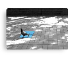 pigeon from Melbourne Uni Canvas Print