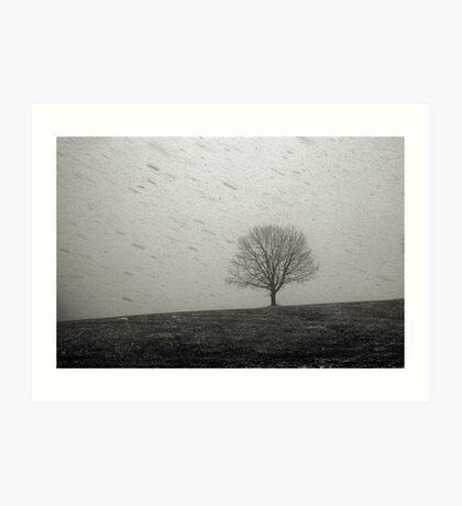 Lone Tree and Snowstorm Art Print