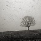 Lone Tree and Snowstorm by Daniel Owens