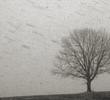 Lone Tree and Snowstorm Sticker