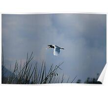Flying Egret Poster