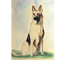 The German Shepherd A Friend For Life Photographic Print